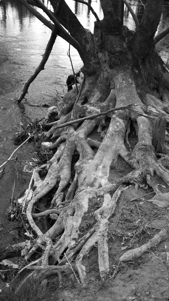 roots swamp alabama
