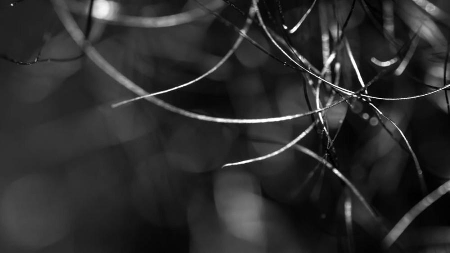 hair macro photography black and white